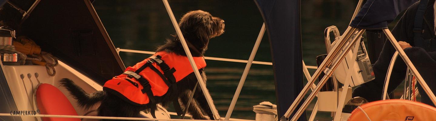 Auf den Lofoten entdeckt - gut ausgerüsteter See-Hund