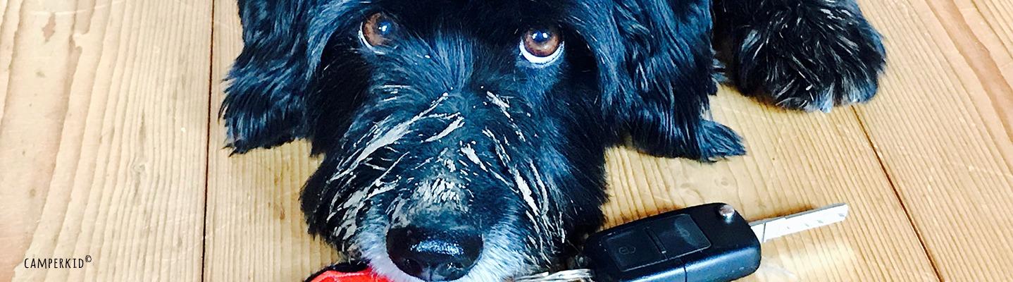 Camping mit Hund – nichts geht ohne Reisecheck